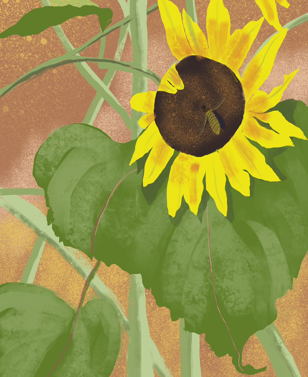 2020_0708 sunflower 1000